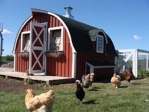 Provide a Safe and Comfortable Coop for Your Chickens