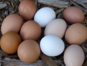 Assorted Chicken Eggs