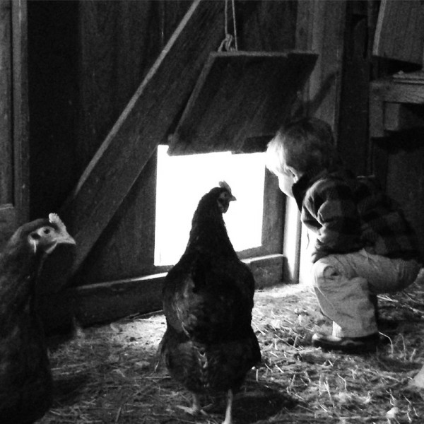 Tips to Keep Your Chickens Cool During the Summer