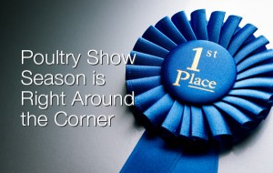 Poultry Show Season is Right Around the Corner