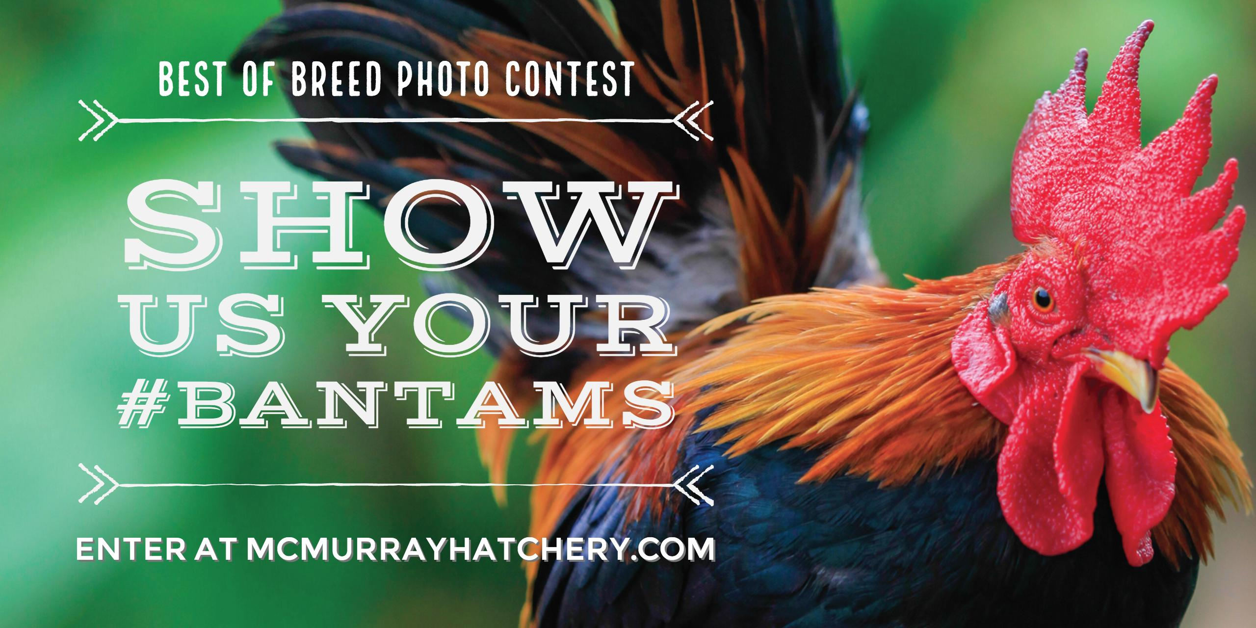 2017 Best of Breeds Photo Contest: Bantams