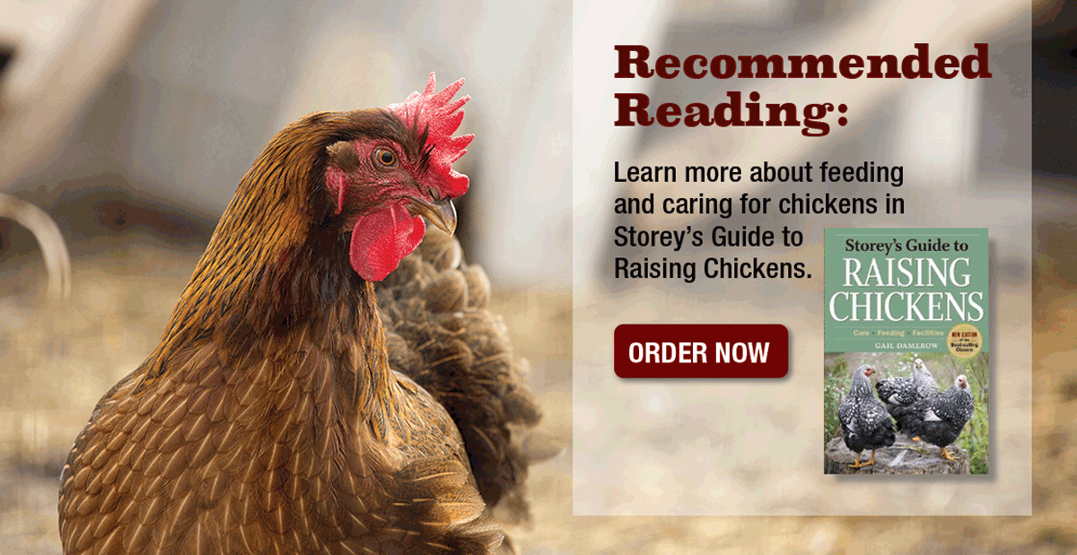 RECOMMENDED READING: Guided to Raising Chickens