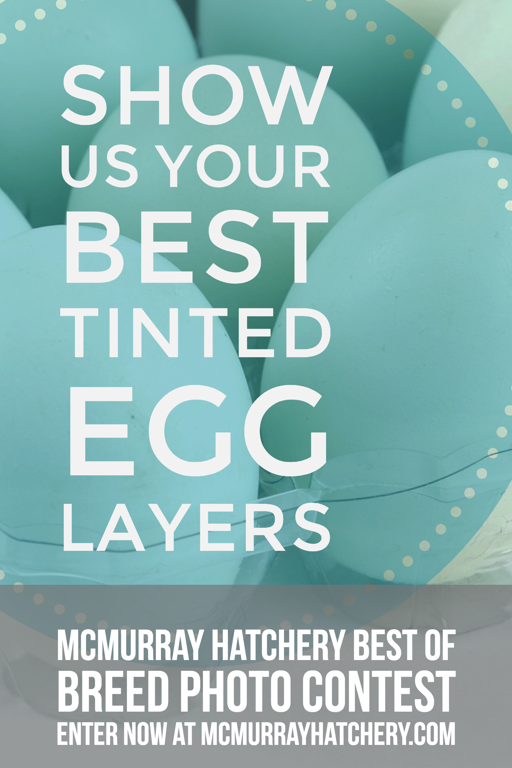 2018 Best of Breed Photo Contest: Tinted Egg Layers