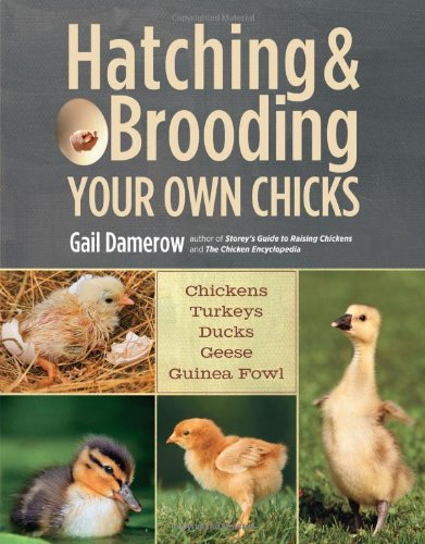McMurray Hatchery - Hatching and Brooding Your Own Chickens
