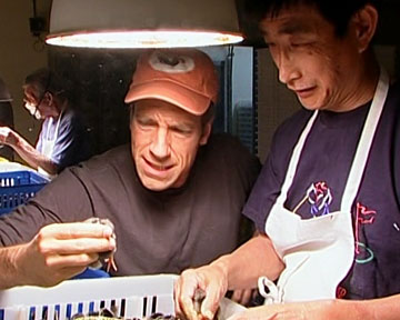 Dirty Jobs With Mike Rowe - McMurray Hatchery - The Chick Sexer