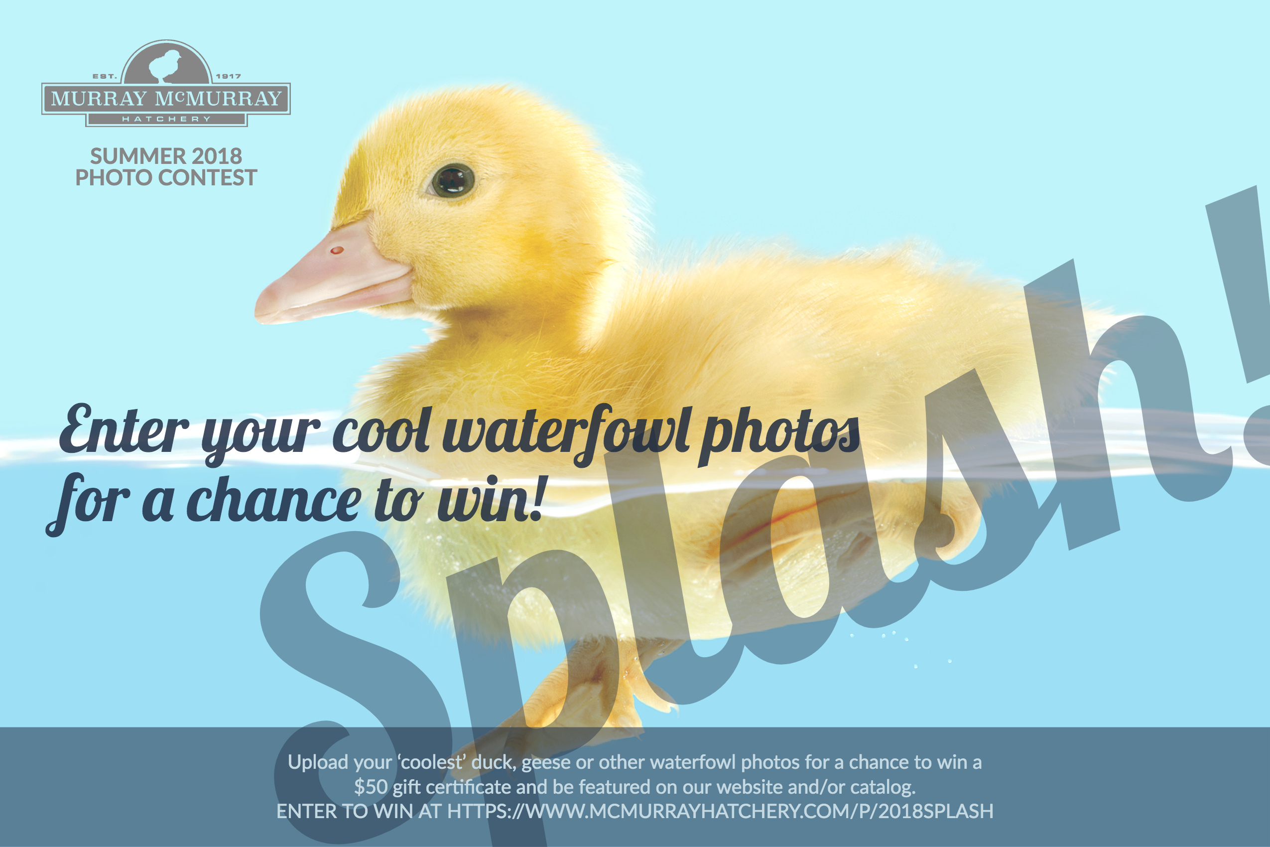 Photo Contest: Make a Splash and Win with Your Waterfowl Photos
