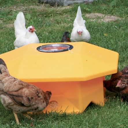 McMurray Hatchery | Chicken Feeders | Extreme Range Feeder