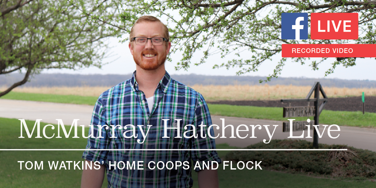 McMurray Hatchery Facebook Live: Tom Watkins' Home Coops and Flock
