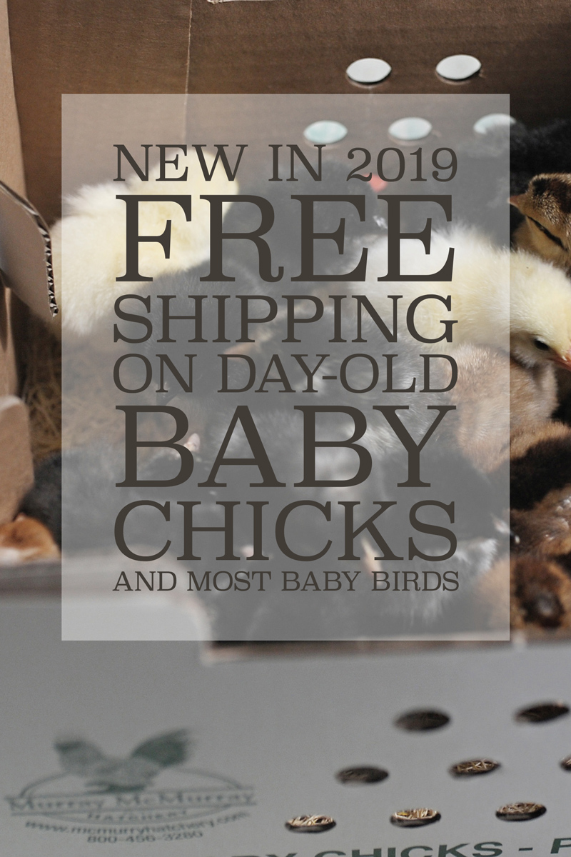 McMurray Hatchery -  Free Shipping on Day-Old Baby Chicks and Most Baby Birds