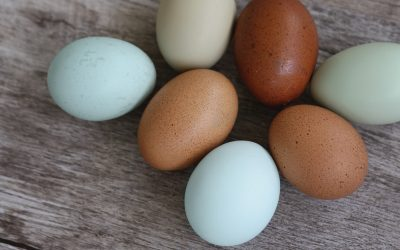 Gail Damerow Discusses Egg Quality