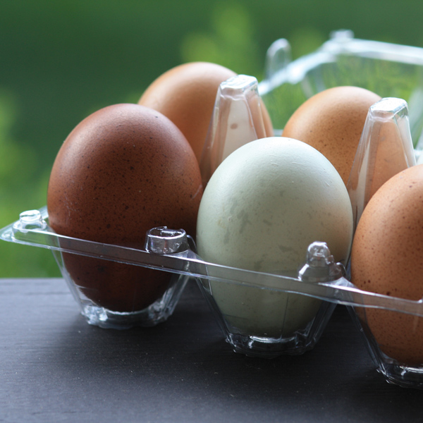 McMurray Hatchery | Recycled Clear Plastic Egg Cartons