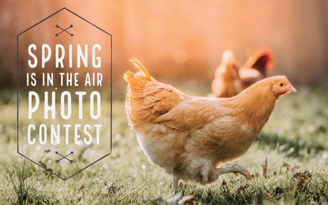 McMurray Hatchery | Photo Contests | 2019 Spring is in the Air
