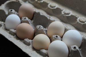 McMurray Hatchery | Hatch At Home | Hatching Eggs