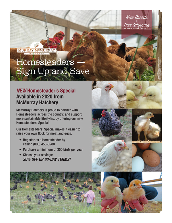 Homesteader's Special from McMurray Hatchery