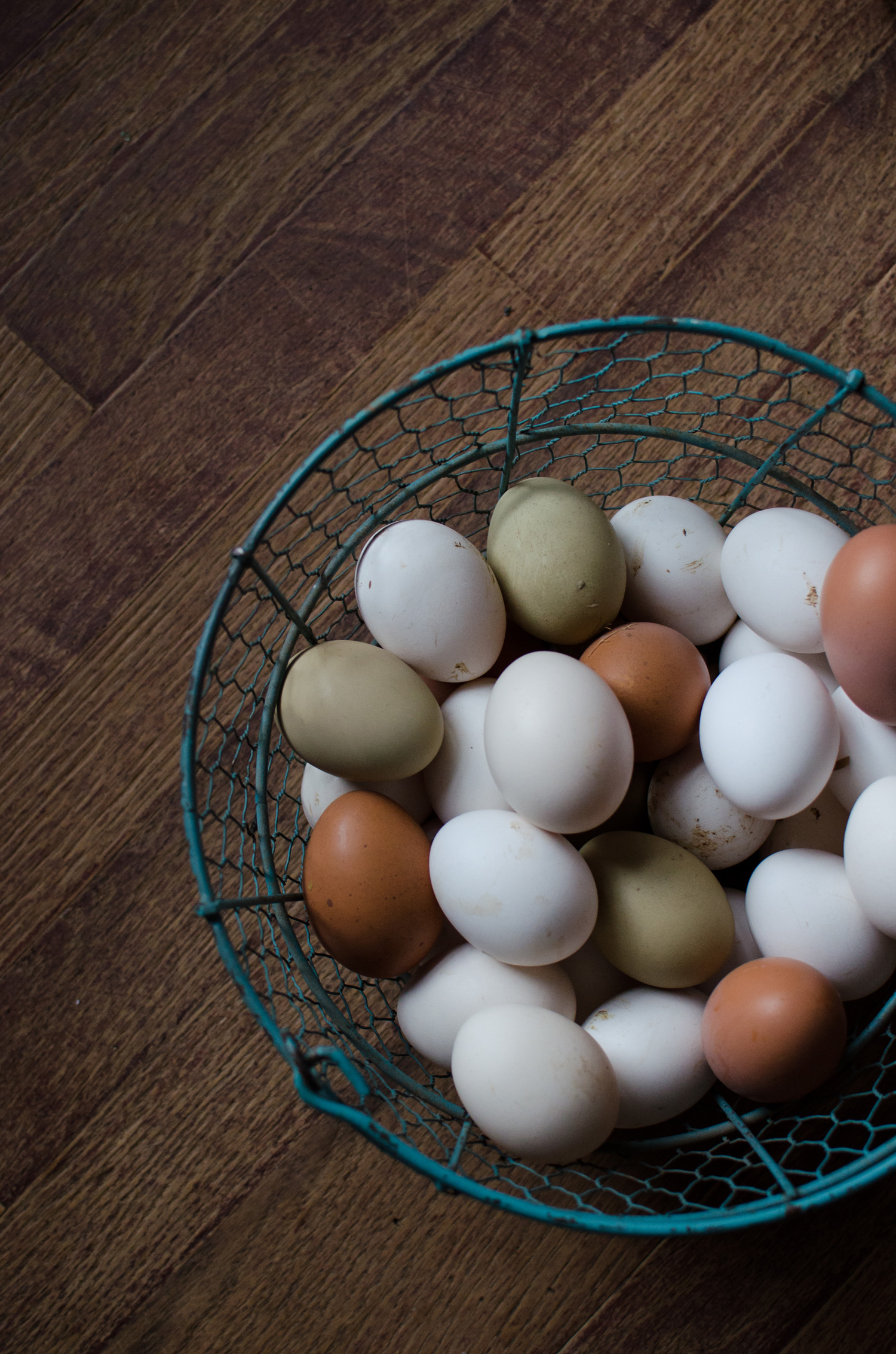 McMurray Hatchery Blog - Selecting the Best Chicken Breeds for Your Homestead - Fresh Eggs