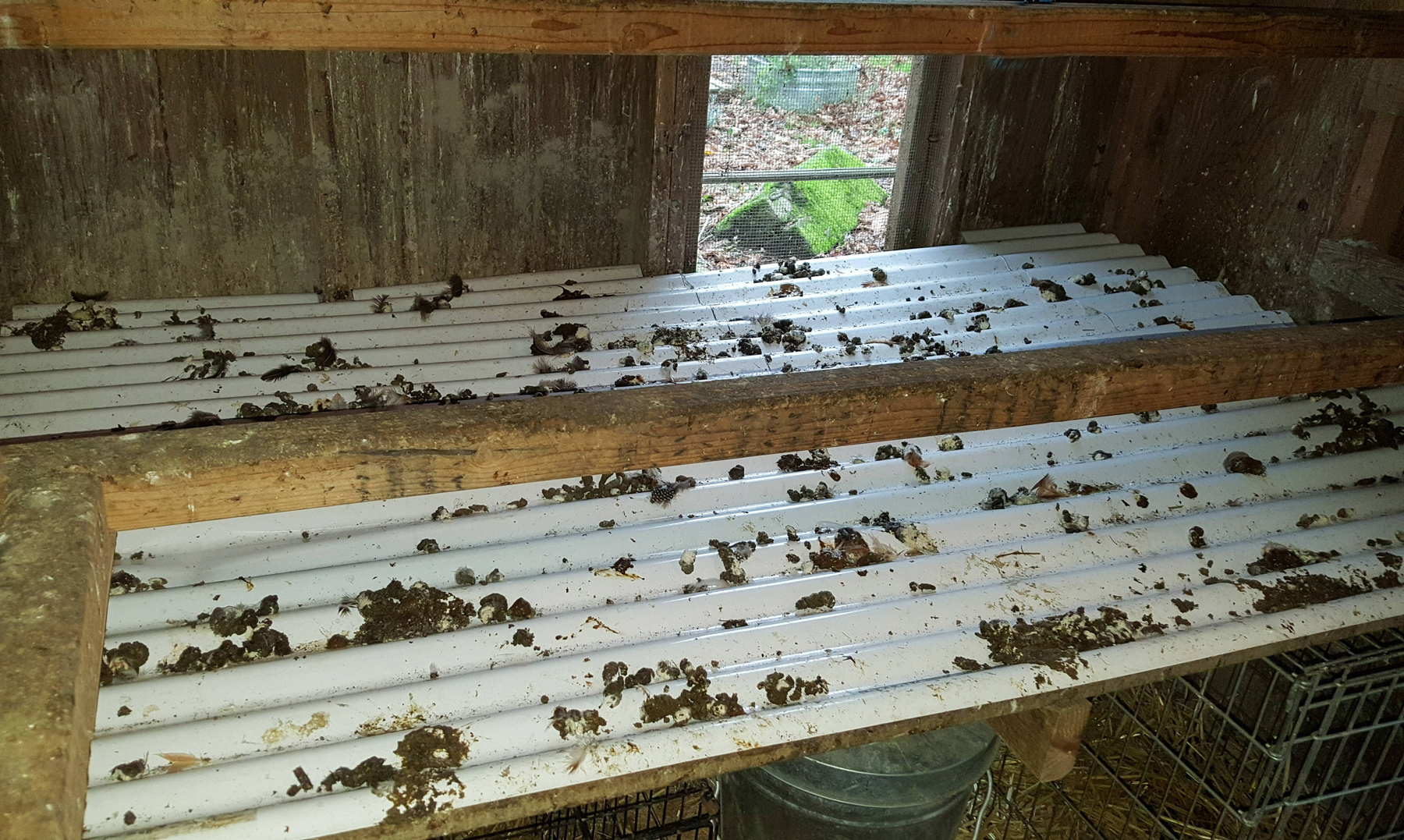 McMurray Hatchery | Chicken Coop Essentials | Droppings Boards