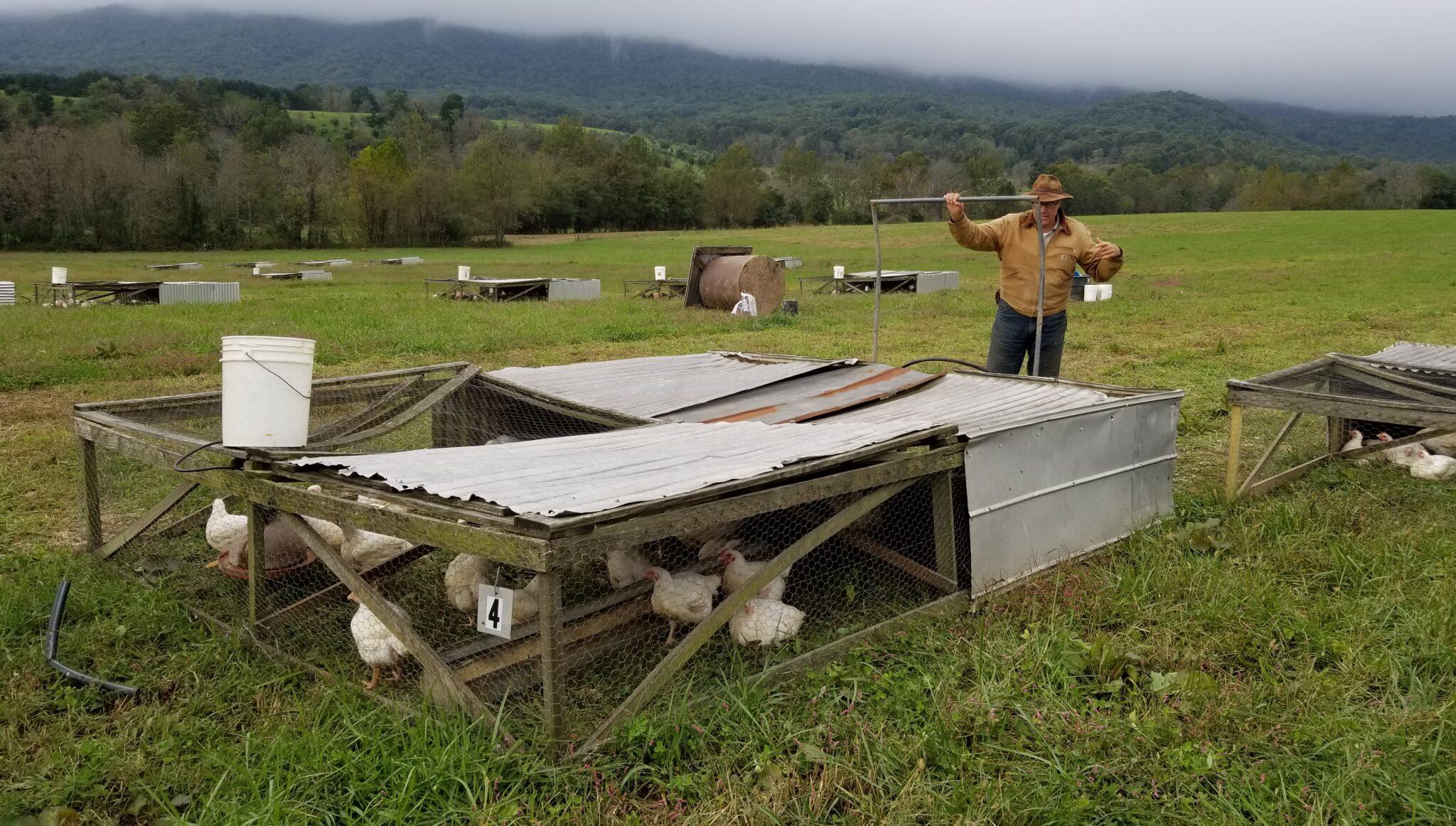 Joel Salatin Chicken Tractor