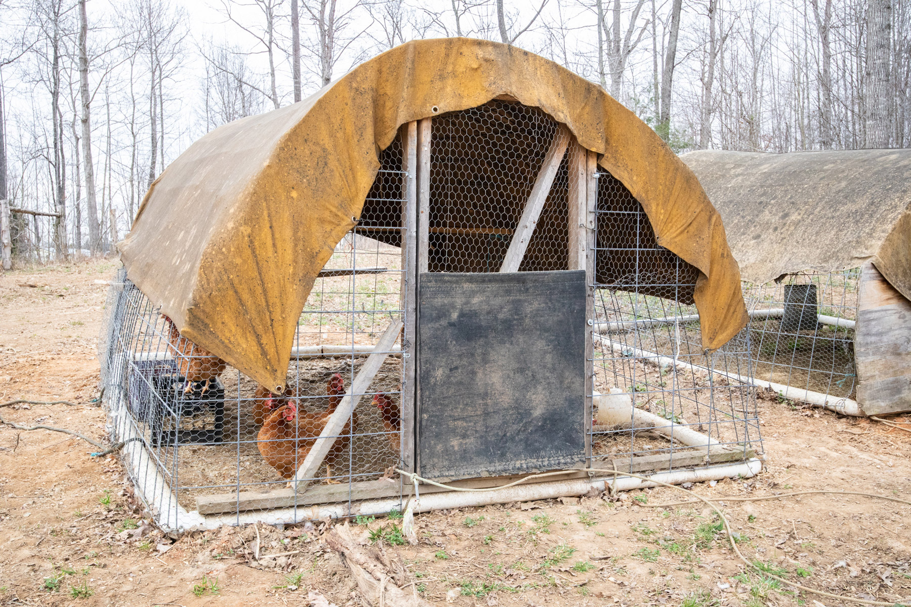 McMurray Hatchery | Homesteaders | Quick And Easy Chicken Coop