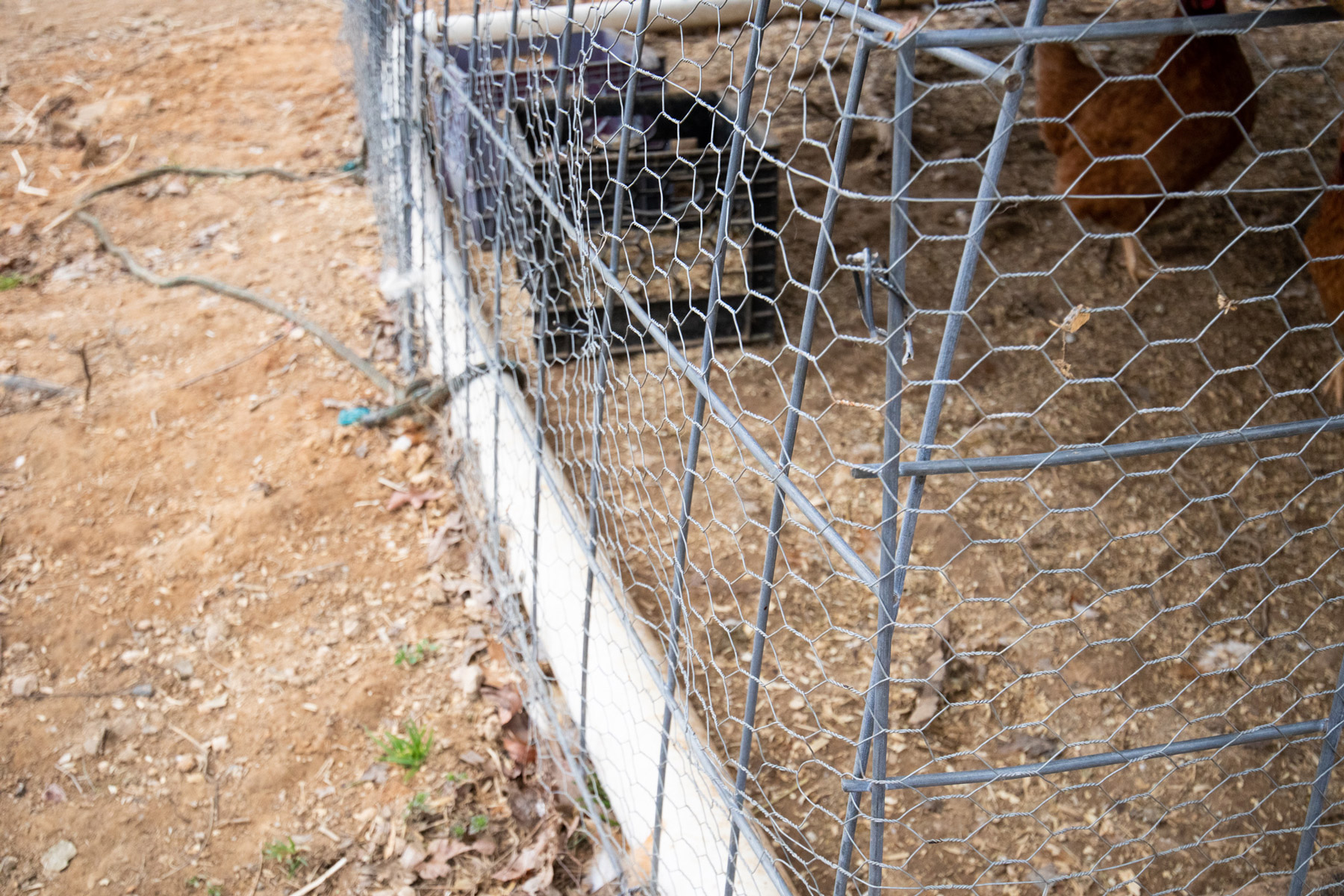 How To Build A Quick And Easy Chicken Coop Mcmurray Hatchery Blog