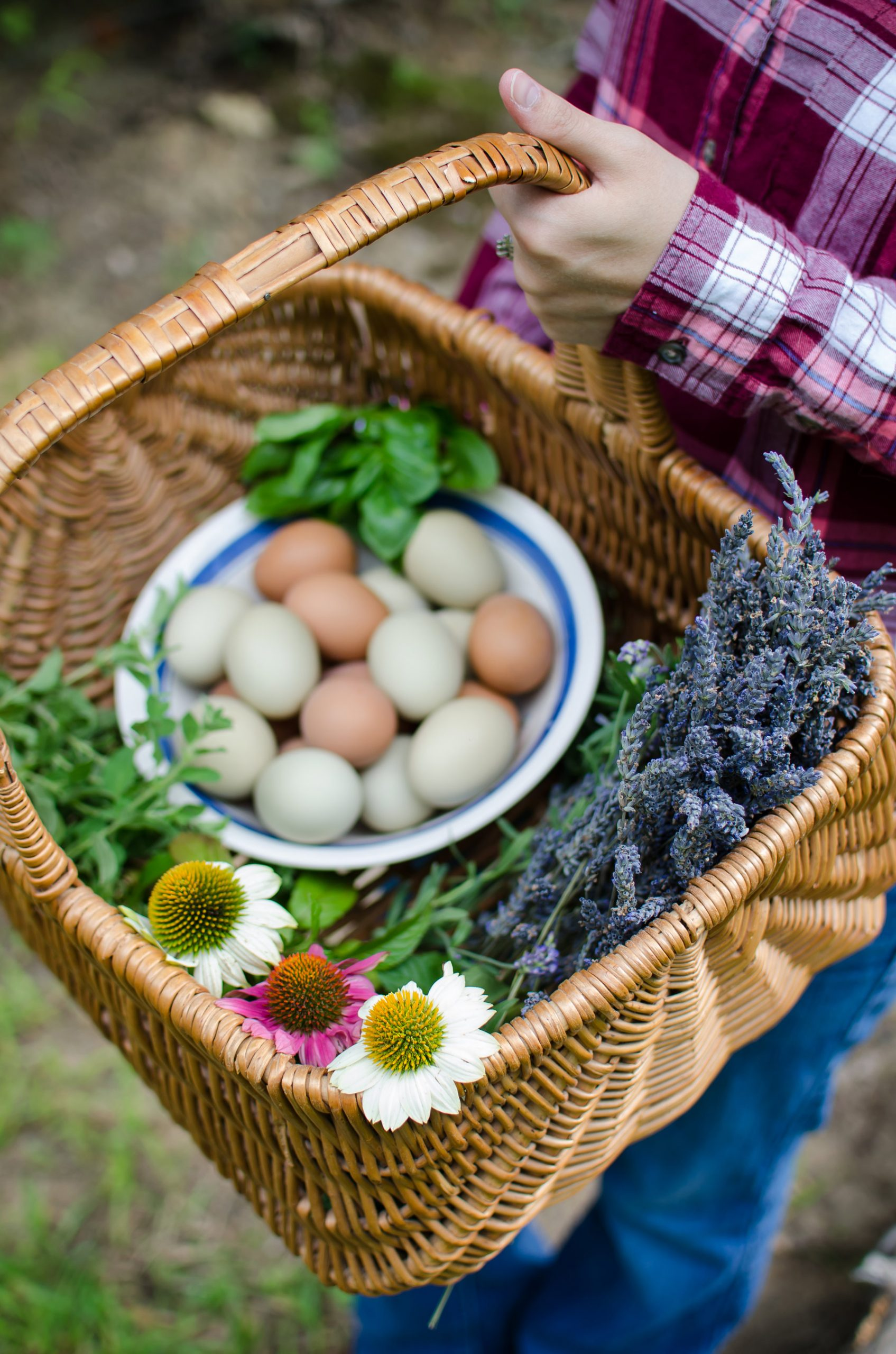McMurray Hatchery   Using Chickens and Geese in the Garden   Fresh Eggs