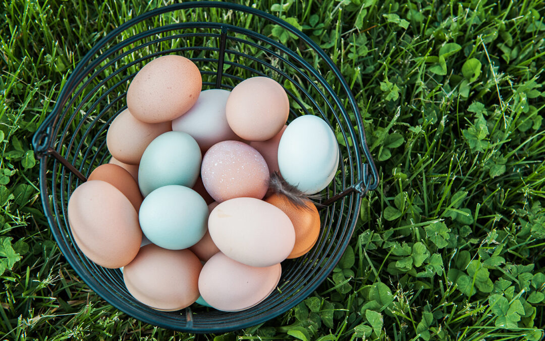How to Preserve Eggs Long-term with These 4 Methods