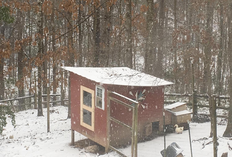 McMurray Hatchery Blog   Winter Chicken Coop   Winterizing Chicken Coops