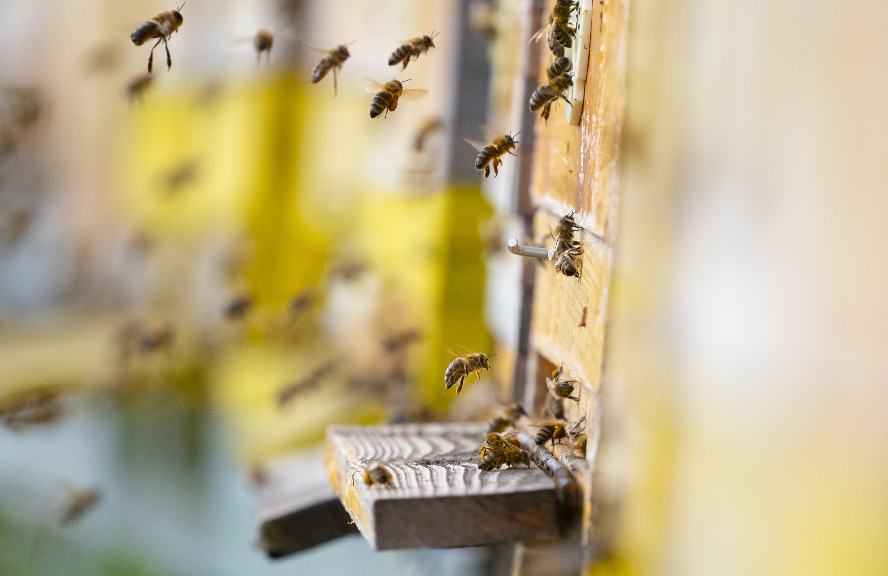 McMurray Hatchery Blog | Livestock for Small Acreage Homesteads | Bees