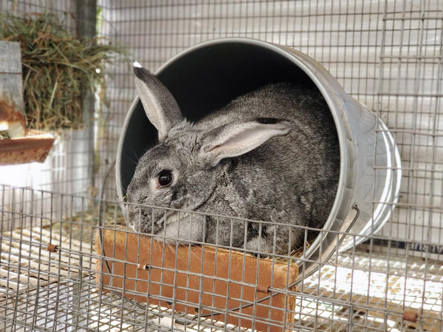 McMurray Hatchery Blog | Livestock for Small Acreage  | Rabbits