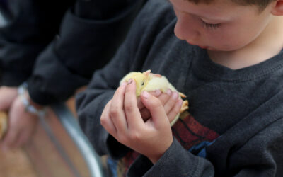 Baby Chicks, Children, New and Old Friends, and Great Conversations